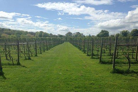Danebury Vineyards